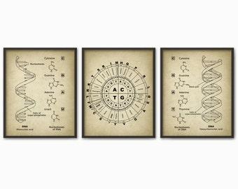 DNA and RNA Genetic Code Print Set Of 3 - Genetics Poster - Molecular Biology - Dorm Decor - Science Student Gift Idea - Biochemistry Poster