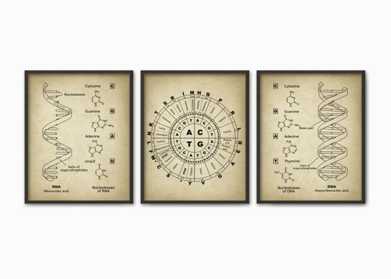 Dna and rna genetic code print set of 3 genetics poster malvernweather Gallery