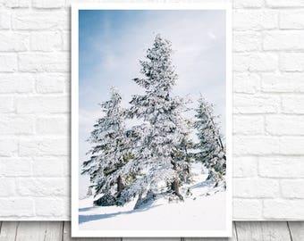Snow Covered Trees, Winter Tree Print, Winter Wall Art, Snow Tree Art Print, Winter Art, Snow Photography, Tree Printable Art, Digital Print
