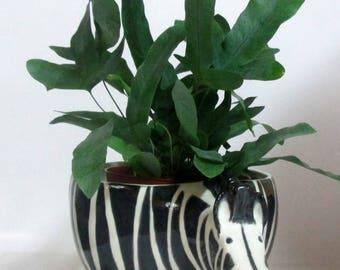 Zebra Planter Ceramic Pottery Hotess gift Hand painted Ready to ship