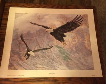 High Quality Wildlife Print, Bald Eagles