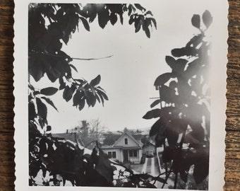 Original Vintage Photograph The Watcher