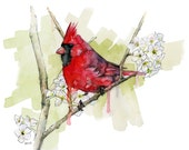 Cardinal Painting - Print...