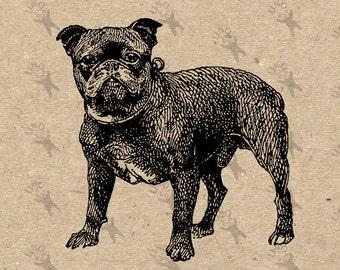 Vintage image French bulldog Pug Dog  Instant Download Digital printable clipart graphic Burlap Fabric Transfer Iron On Decor T-shirt 300dpi