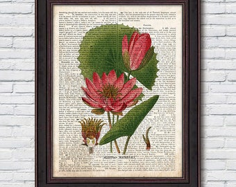 Water Lily Print, Vintage Botanical Poster, Water Lily, Botanical Illustration, Dictionary Art - DI041