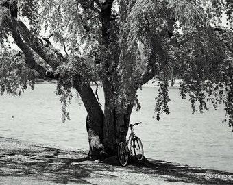 Furman University, By the Tree, Greenville Photo Print 8x10 Black and White Fine Art Photography  Greenville South  Carolina
