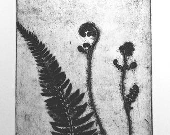 Fronds Unfurling - Softground Etching