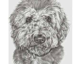 Custom Dog Portrait Example in Pencil - Pet Portraits - Dog Drawing - Animal Artist - Pencil - Fine Art