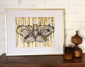 Gold Moth