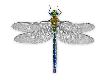 4 Dragonfly note cards with 4 envelopes