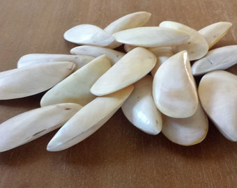 Beach Decor, Beach House Decor, Sea Shells, Shells, Craft Shells, Polished Shell,Polished Mussel Shell, Mussel Shells