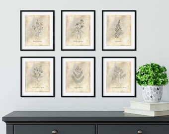 Set of 6 Botanical Printables, Botanical Art, Farmhouse Art, Botanical Drawings, Vintage Botanicals, Instant Download, DIY Farmhouse Style