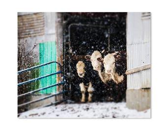 Snowy Cow Art Print, Farmhouse Decor Print, Abstract Winter Art, Farmhouse Art, Rustic Wall Art, Hereford Cow Print, Large Wall Art,