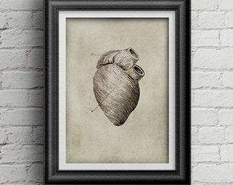 Anatomía corazón impresión deco de cartel de la medicina de 041 - ilustración de corazón cartel descarga digital - viejo corazón - corazón - - anatomía antigua