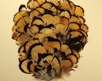 Golden Pheasant Reeves Feather Pad.