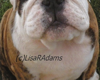 Funny Dog Note Cards Bulldog Diet Creationarts Free Shipping