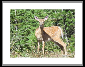 White Tail Deer Fawn, Animal Photography, Personalized Cards and Prints