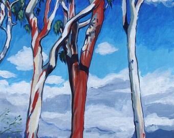 Eucalyptus, Irvine, California