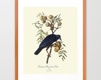 Crow - Ornithological Art Print - Crow Print -  Audubon Art - John James Audubon Art Print