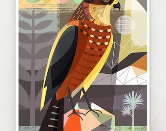 New Zealand, native, Karearea, print