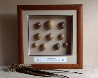 Collectable, British Game Birds Replica Eggs, Wildlife,,Framed Collectables,Handmade.Free Shipping,Display Case