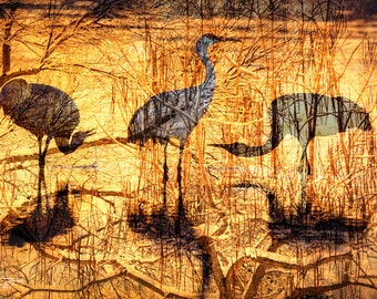 12x18 Canvas Ready to Ship: Sandhill Cranes, Abstract Montage, Bosque del Apache, Office Print, New Mexico, Bird Photo, Gift for Him