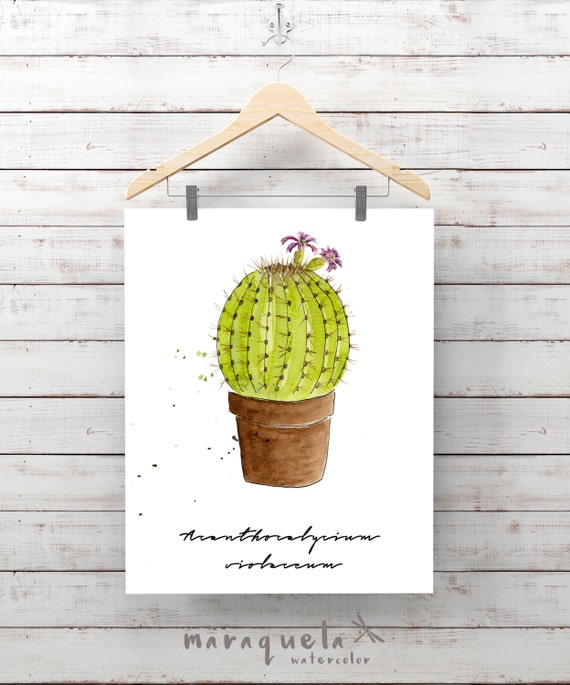 SUCCULENT PLANT illustration II Watercolor, fat, Cactus Cacti,Cactées, Plante Succulente,grasses, Cactos,home decor Gift living room nature