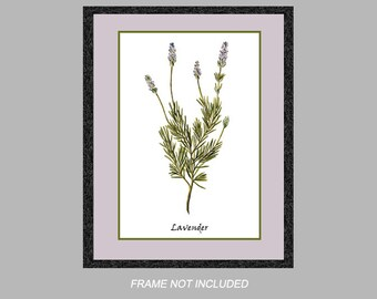 Vintage Botanical Print - Lavender - Herb Series - 8x10, 11x14, and 16x20 - Digital Matte - Ready to Frame, Kitchen Wall Decor
