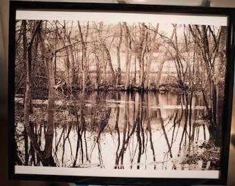 Tree Reflections #1 Framed Photo