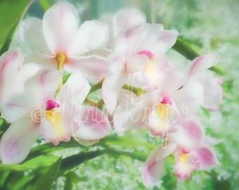 Floral Art. Fine Art Photography. Orchid. Vivid Spring Colors. Botanical Wall Art. Garden. Cottlage Decor. Home or Office Decor.
