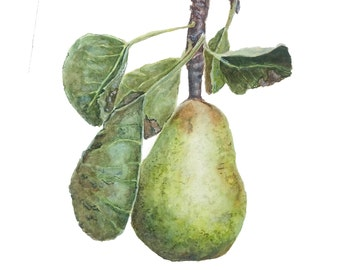 Pear in a Pear Tree Fine Art Giclee Archival Print from original watercolor painting by artist Joy Neasley