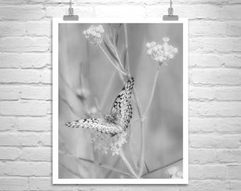 Black and White Butterfly Photograph, Butterfly Picture, Butterfly Print, Insect Art, Canelo Hills Arizona, Butterfly Nature Art, Pollinator