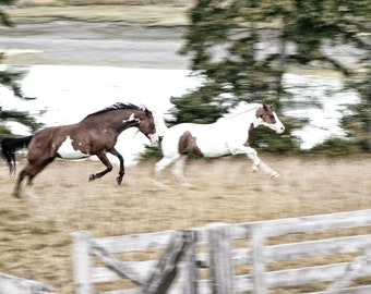 Horses Kicking Their Heels Up. Horse Photography, Equine Photo Wall Art, Gift for Her, Gift for Him, Galloping Horse Art, Running Free