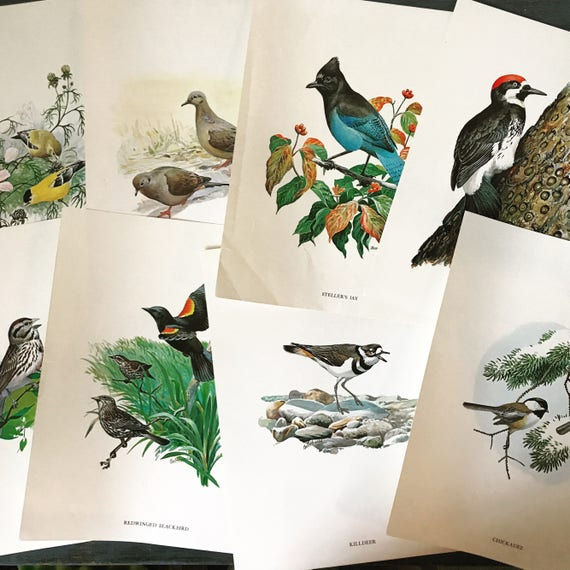 vintage bird prints - Bob Hines color wildlife lithographs - nature woodland ornithology