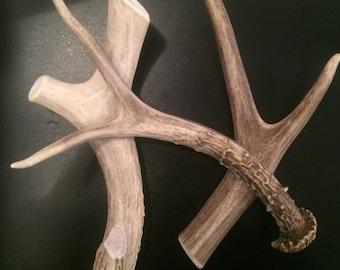 Forked deer antler dog chew