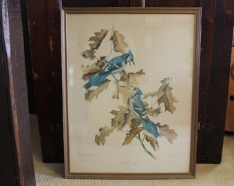 Vintage Blue Jay Print, Large Bluejay Print, Blue Jay by Roger Tory Peterson, No. 1, Framed Bird Print, Large Peterson Lithograph