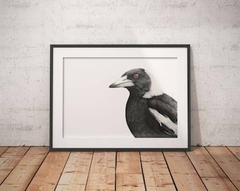 Australian Magpie Print - A3 - Magpie Print - Australian Bird Print