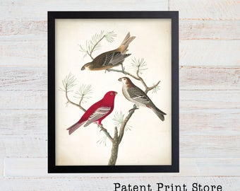 James Audubon Pine Grosbeak Art Print. Bird Print. Audubon Prints. Bedroom Art. Bird Artwork. Bird Print. Bird Art Print. Living Room.