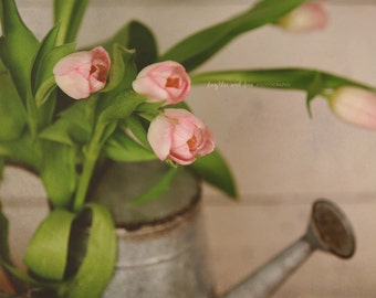 Pink Tulips Fine Art Photography Shabby Chic Floral Romantic Feminine Rustic Cream White Ivory Green Cottage Still Life Home Decor Wall Art