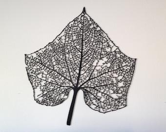 Large Leaf Skeleton