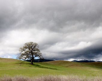 Lonely tree, hillside, cloudy sky, grass, hills, photography, picture, color, print, fine art, country side, landscape photography, photo