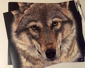 Wolf Portrait: Numbered Print