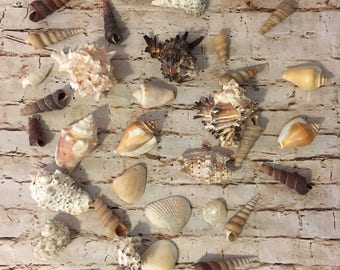 Lot of Boho Vibe Beach Decor Seashells