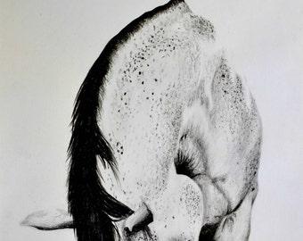 Arabian horse. Original pencil drawing. A4. Free shipping