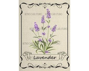 Digital Download Framed Lavender Herb Illustration Transfer Clip Art; 1065