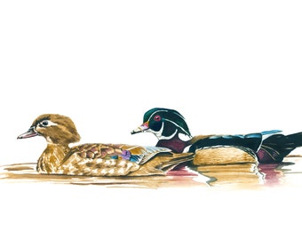 Wood Ducks Watercolor and Gouache Illustration