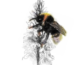 Bumble bee sketch | Limited edition fine art print from original drawing. Free shipping.