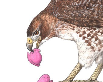 Red Tailed Hawk - Snack Attack - Archival Print