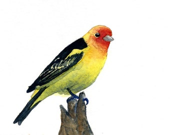 Watercolor Western Tanager Print 8 x 10