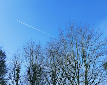 Trees and plane